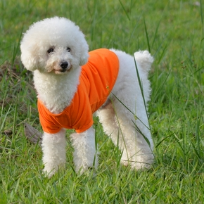 Solid T-shirt for Your Pet