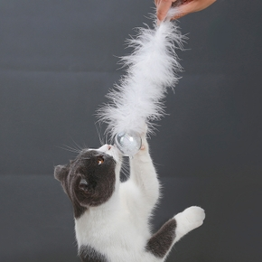Christmas Crystal Ball Cat Toy