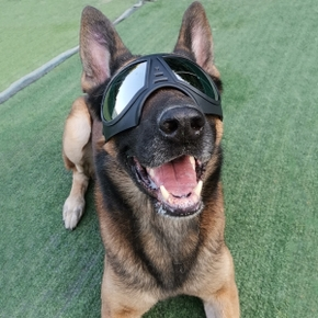 Pet mask glasses waterproof and snowproof soft frame goggles