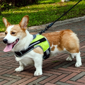 Dog Harness (2 styles, with light and without light)